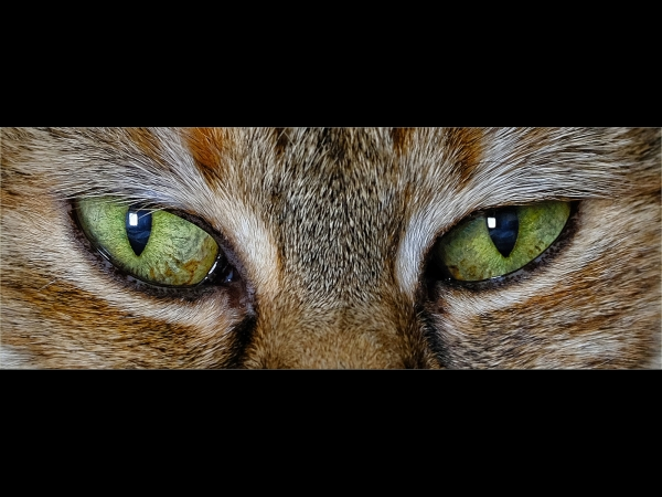 Joint 2nd, David Luker, Cats Eyes