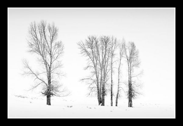 Winter Sentinals by Andrew Charlesworth CPAGB