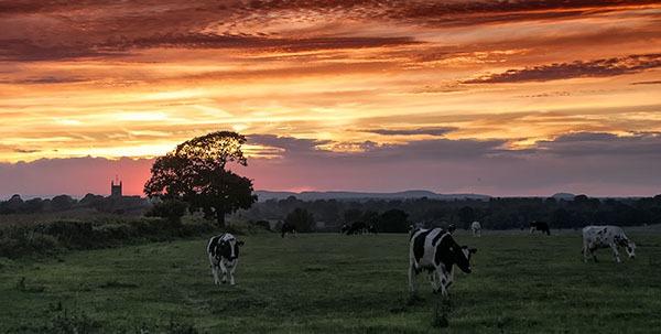 Cheshire sunset
