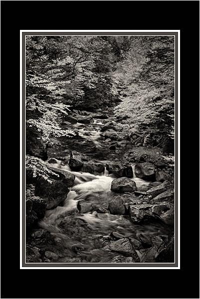Appalachian Stream