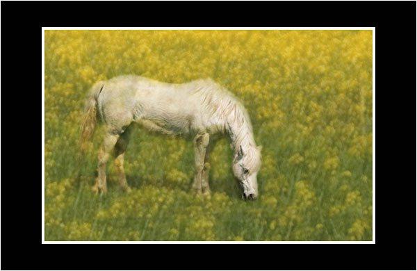 01 Pony