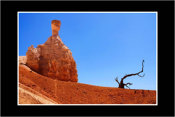 02 Bryce Canyon Details