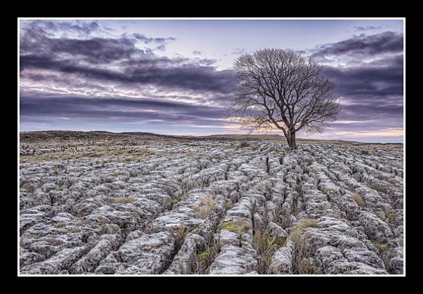 02 Lone Tree at Malham Mark Payne