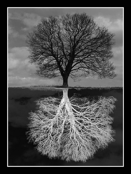 01 Negative Roots Paul Topham 020 0