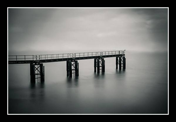 01 Bird on Misty Pier Paul Compton 020 0