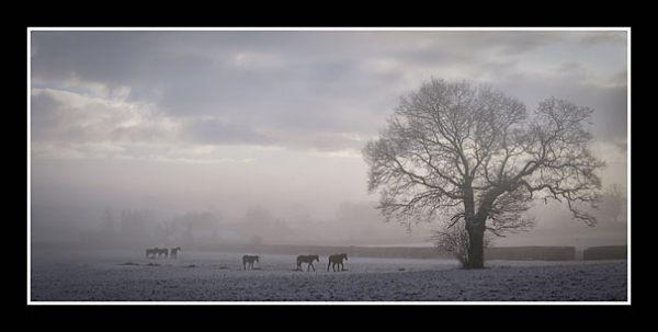 01 AlmaSankey Winterfeed